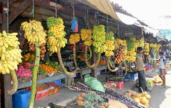 Der Obstmarkt in Galle